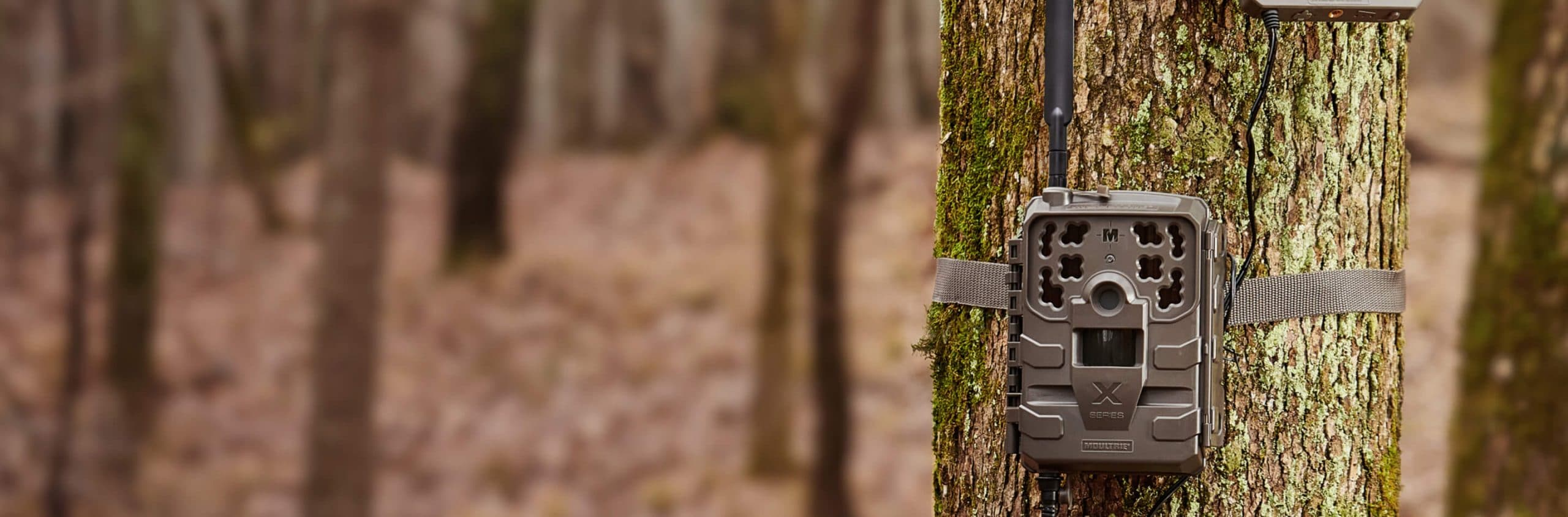Cellular trail camera strapped to tree