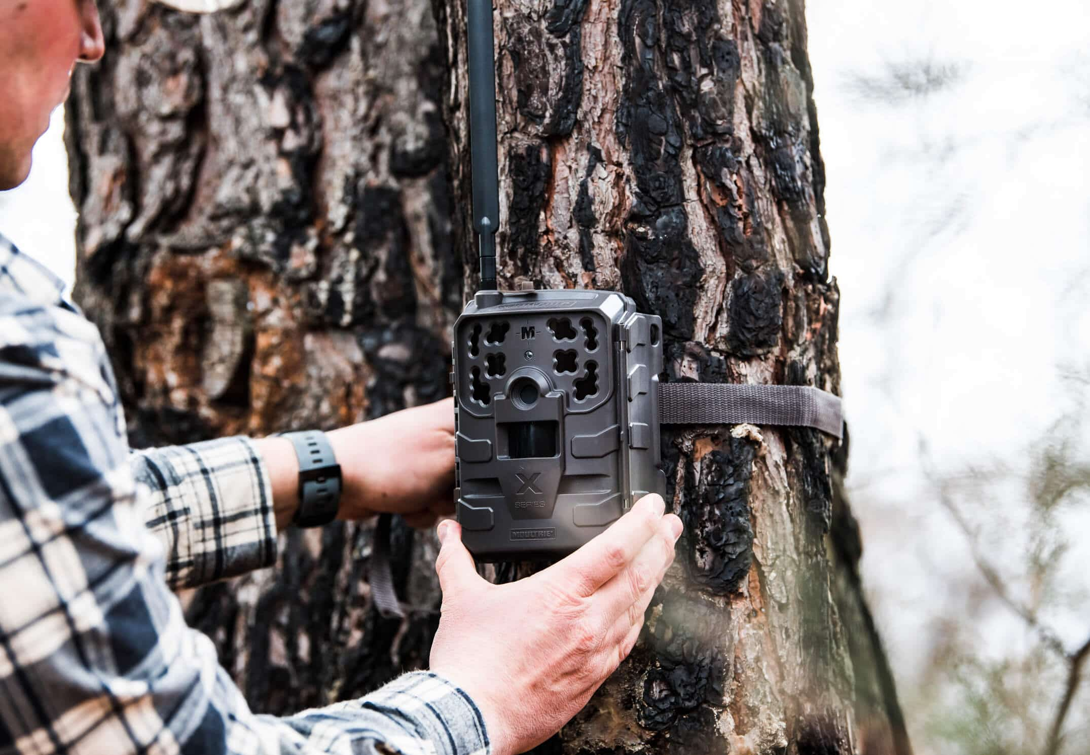Man strapping cellular trail camera to tree