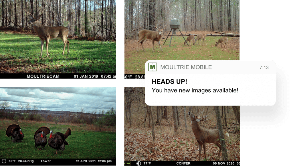 Moultrie Mobile app notification
