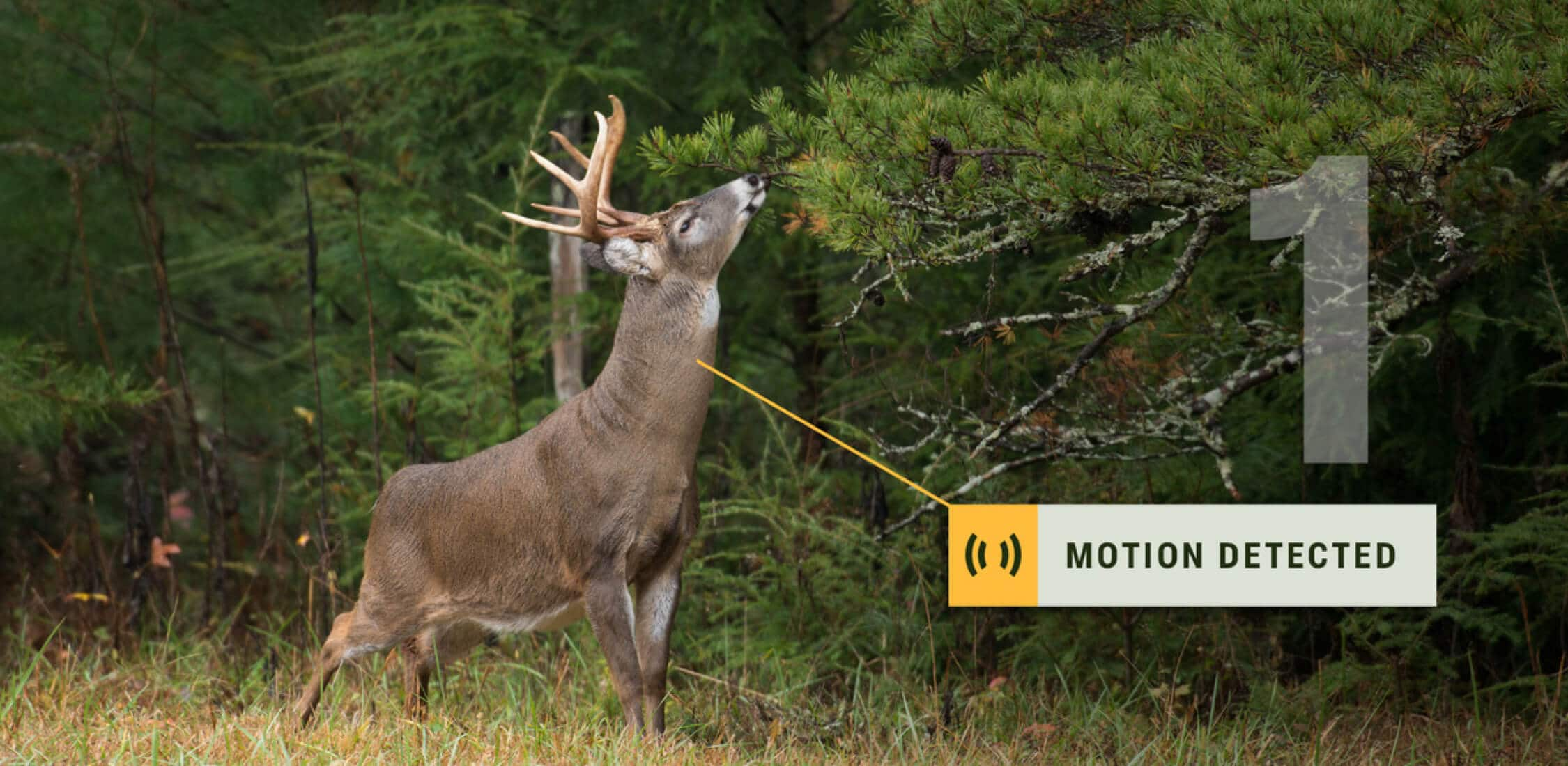 Motion detected of deer moving near camera