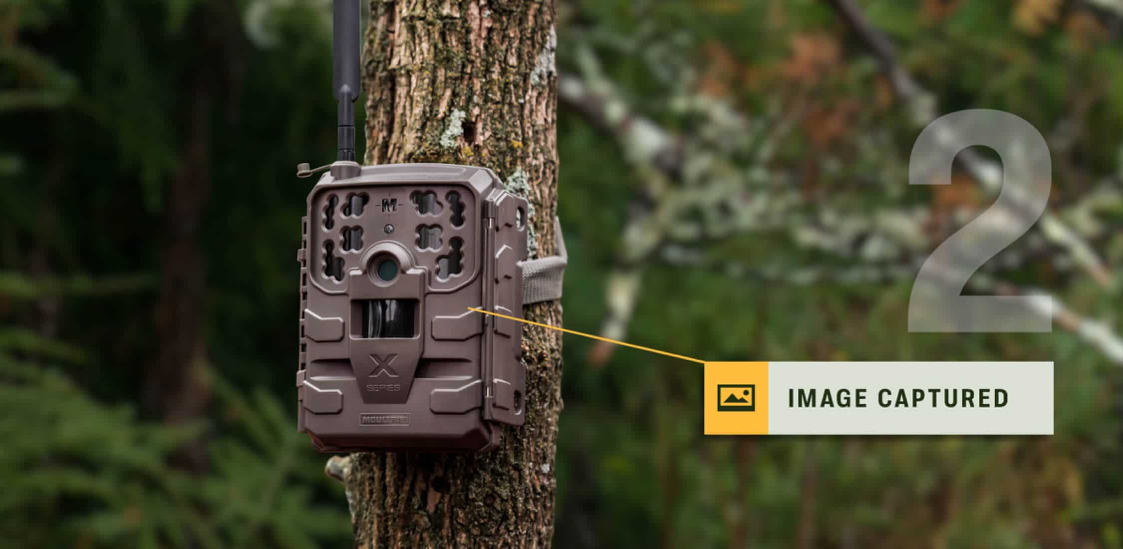Moultrie Cellular Trail Camera capturing image