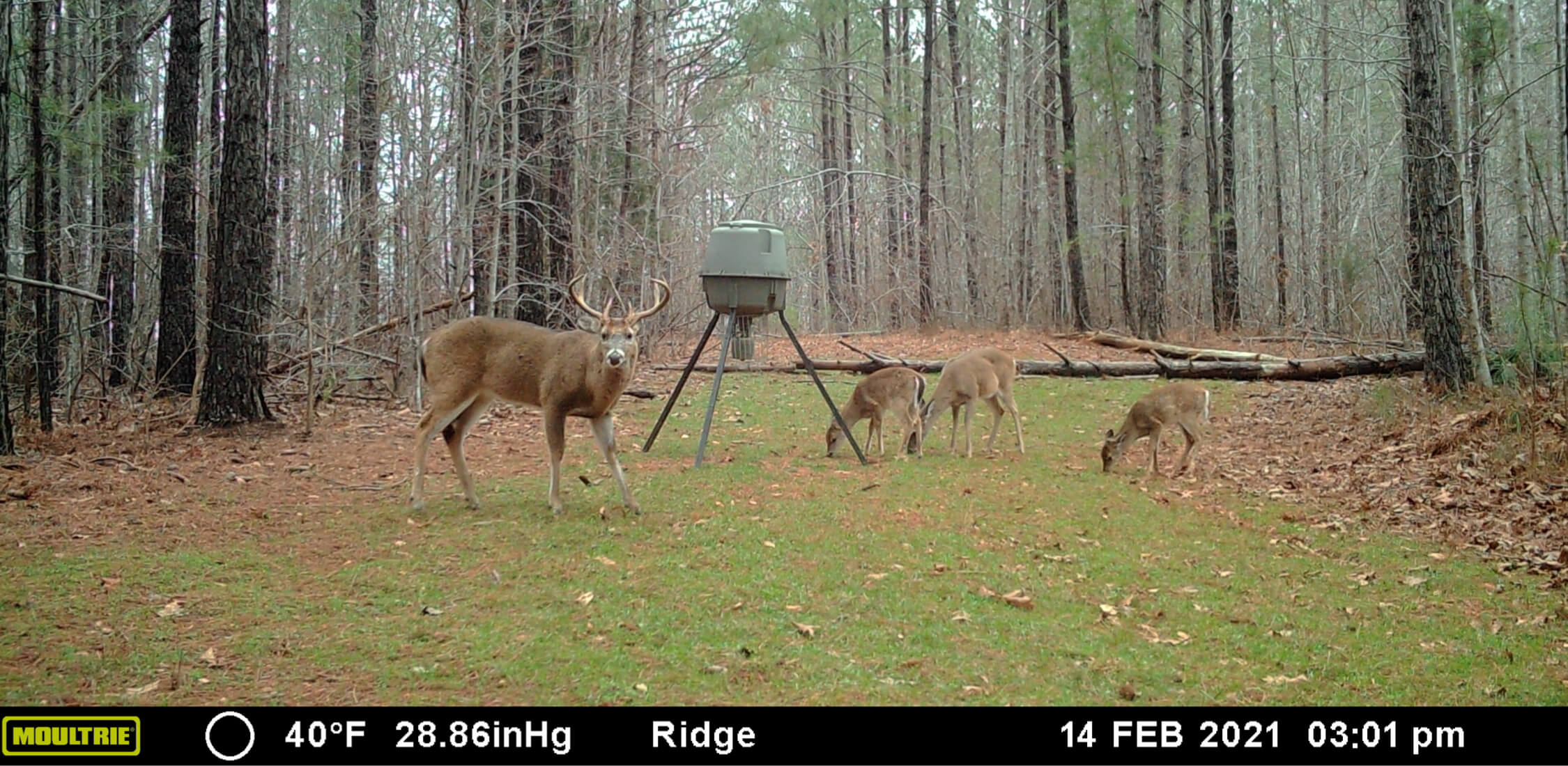 Image of deer near a feeder taken from Moultrie Mobile cellular trail camera