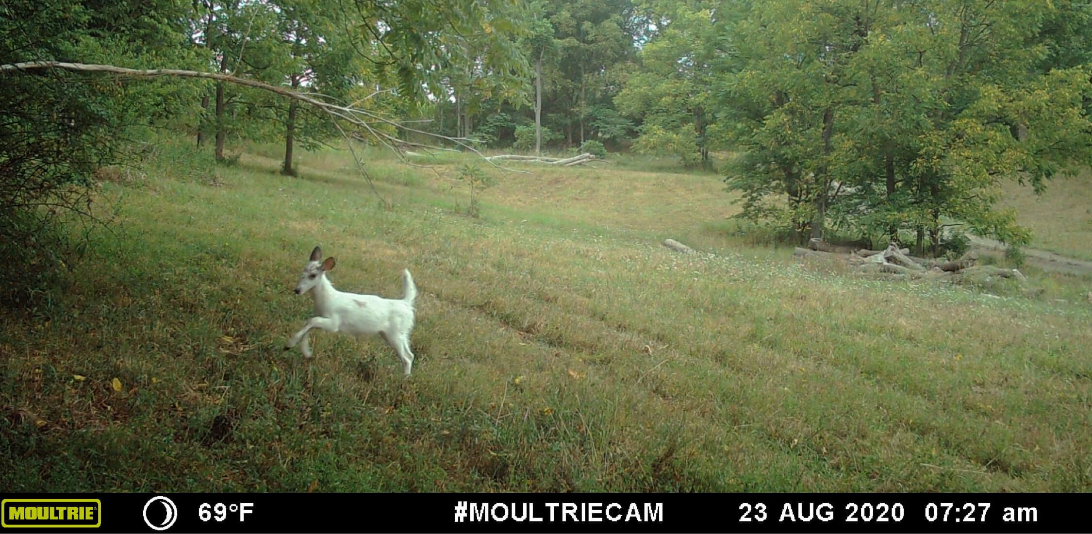 Image taken from Moultrie Mobile cellular trail camera
