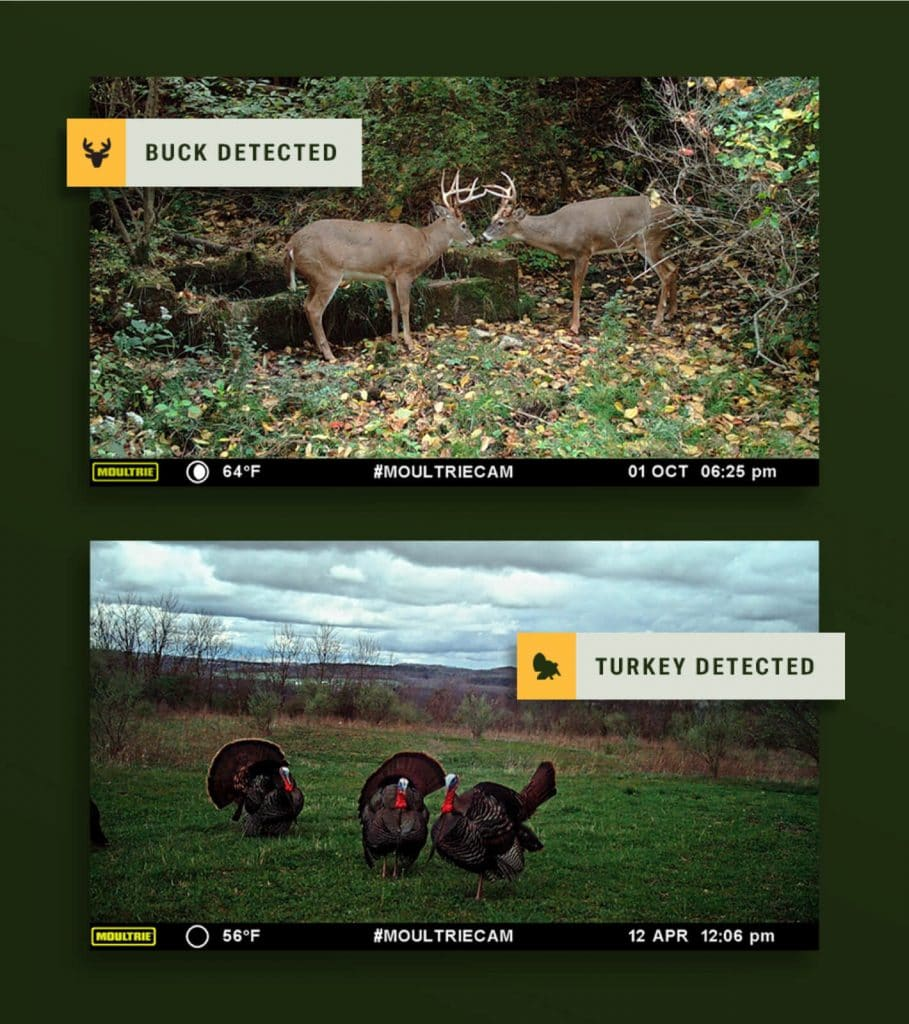 Buck and turkey detection