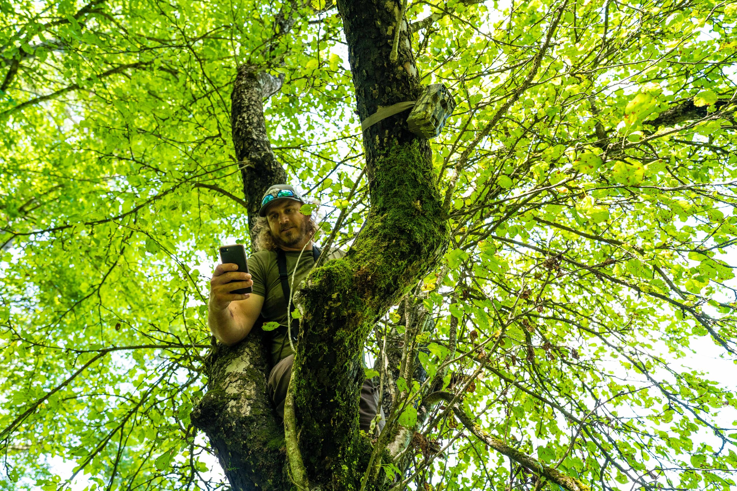 Man In Tree Holding Phone
