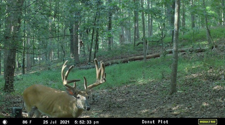 deer-caught-on-moultrie-mobile-trail-camera